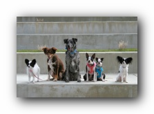 Chattanooga Dog Park