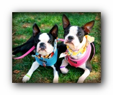 nashville dog day festival